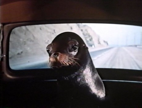 Sammy the Way Out Seal 3